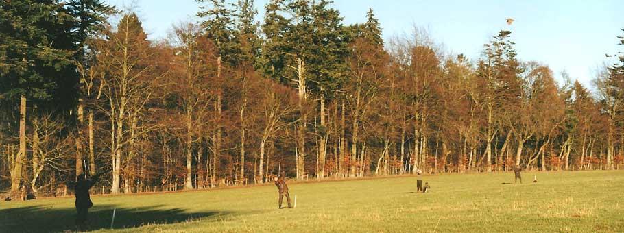 Pheasant Shooting Perthshire
